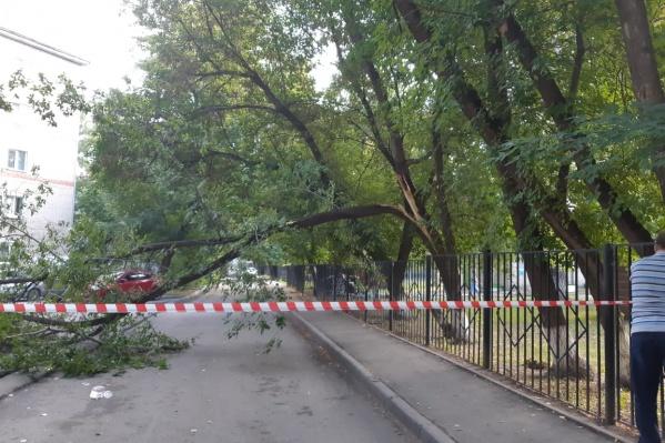 Дерево перегородило проезд к детсаду и школе
