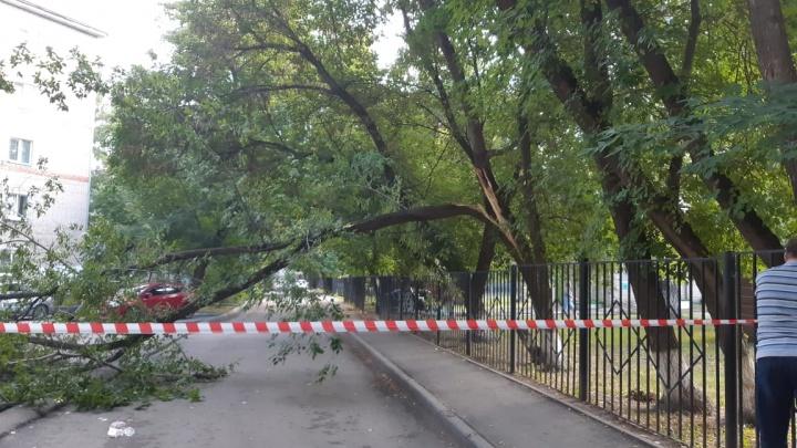 Упавшее дерево перекрыло проезд к детскому саду в Ленинском районе