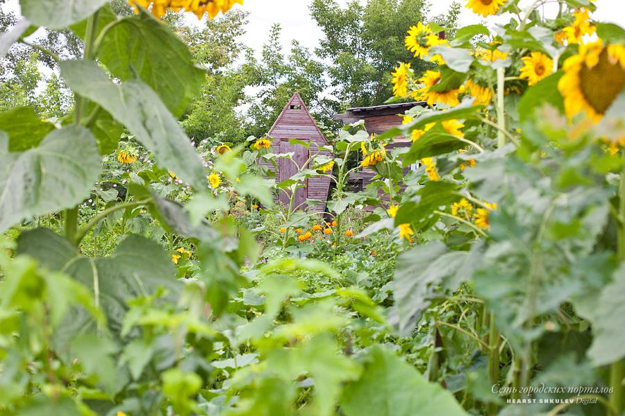 Следите за сорняками на вашем участке и не давайте им переползать к соседям — за это, оказывается, можно попасть на штраф