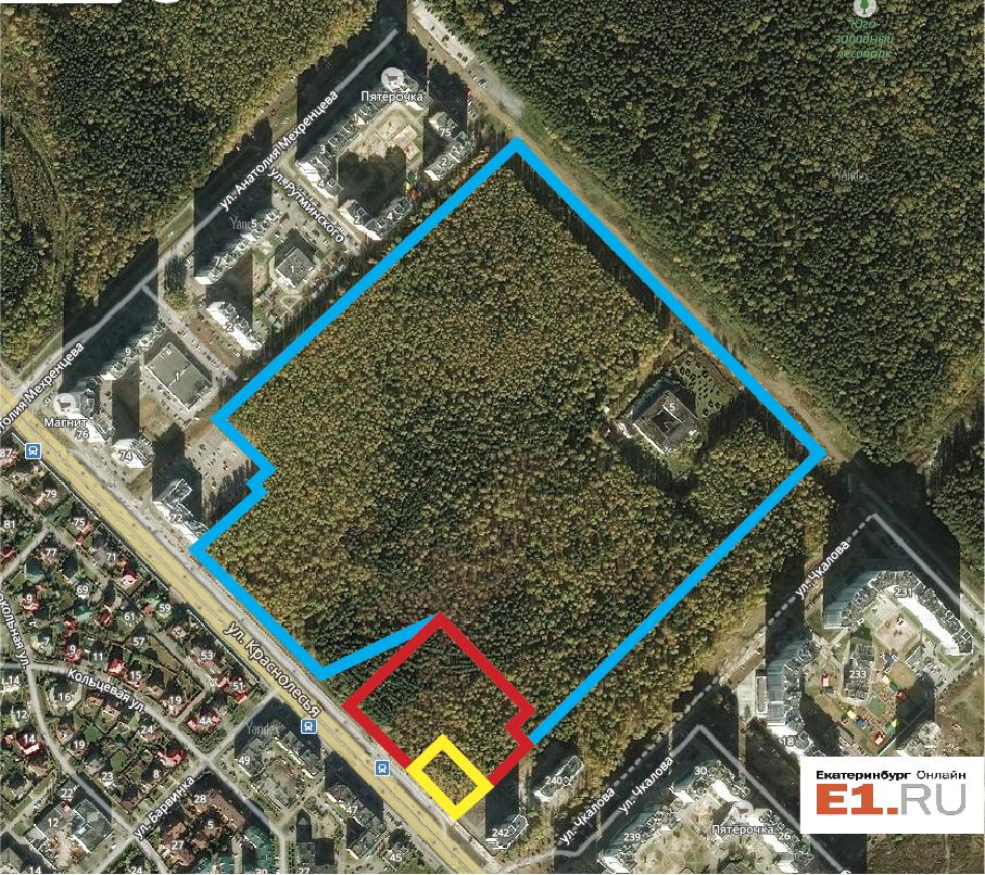 Схема рощи: желтый и красный участки уже выкуплены «Атомстройкомплексом», по синему только что прошел аукцион