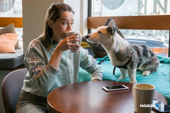 В кафе с собакой можно ходить по закону