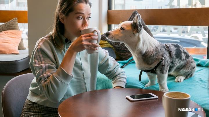 Пёс в большом городе: как хозяйка двух корги пытается сделать Красноярск более дружелюбным к собакам