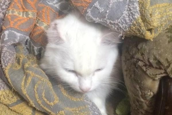 В семье замерзают и домашние любимцы: два кота, котенок и собака