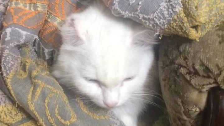 «Спим в махровых халатах»: мама двойняшек из Уфы пожаловалась на еле теплые батареи