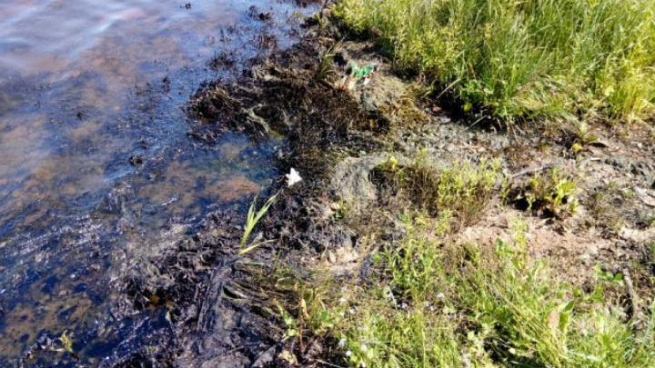 «Могут вызывать отравление»: в Ярославской области будут искать тех, кто залил Волгу нефтепродуктами