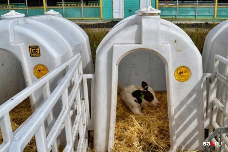 На базах хотят завести около 10 тысяч голов скота