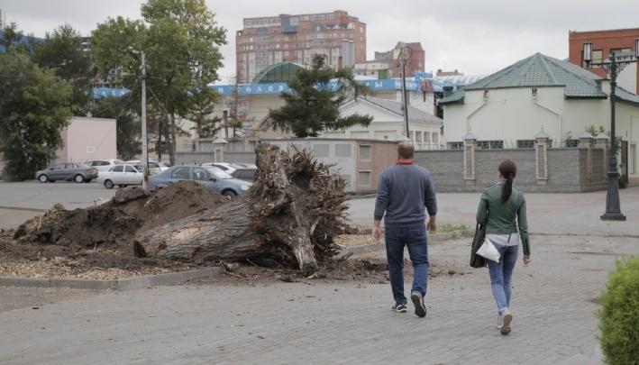 """«Показали схему с """"Яндекс.Карт"""" с крестиками»: в Челябинске потеряли список деревьев и кустарников"""