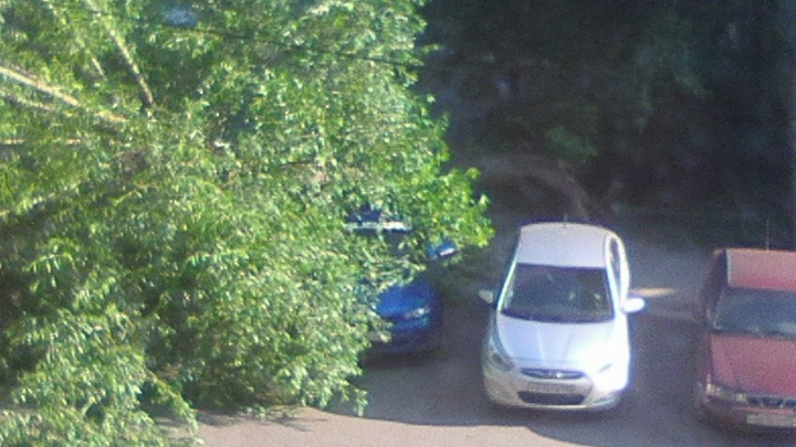«Паркуюсь где хочу»: в челябинском дворе на автомобиль рухнуло дерево