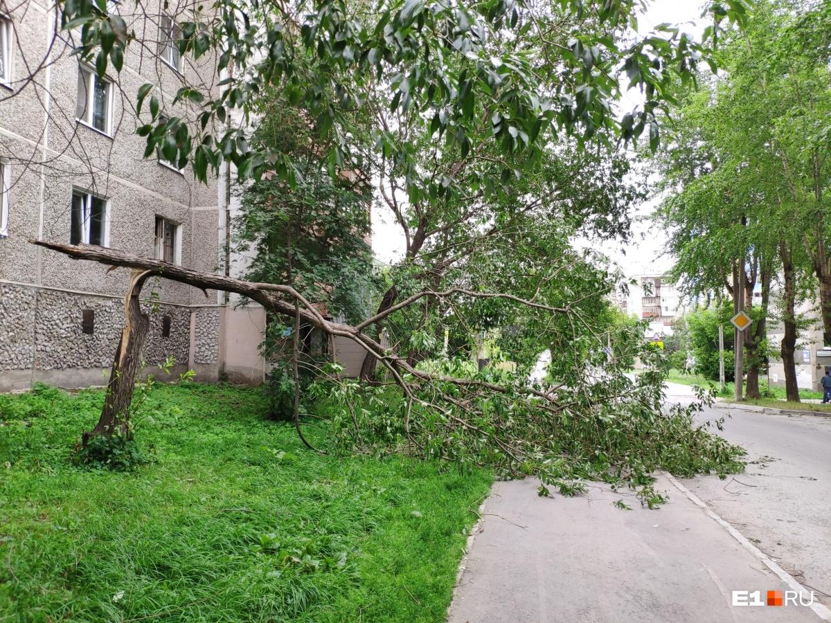 Это случилось возле дома на улице Дружининской в Екатеринбурге
