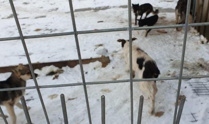 Зоозащитники заявили, что в свердловской фирме по отлову собак работают живодеры