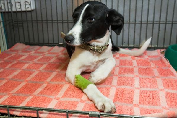 Собак вывезут со свалки в новый приёмник на Автодорожной