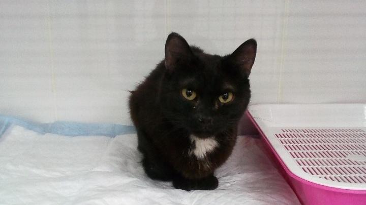 Екатеринбурженка разрешила сломать стену в туалете, чтобы достать чужого провалившегося котенка