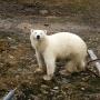 Ярославский фотограф прибрался в Арктике и наделал крутых снимков