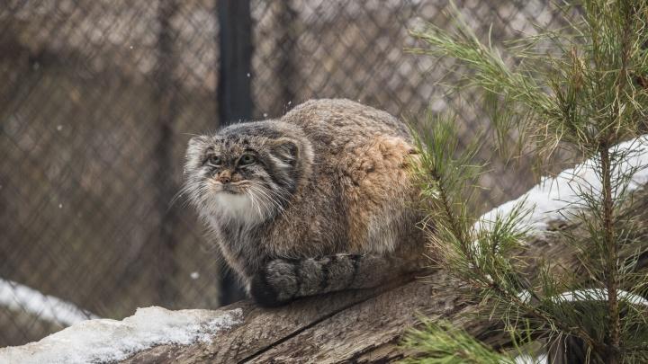 Зоопарк объявил о массовой акции: уборка растянется на неделю