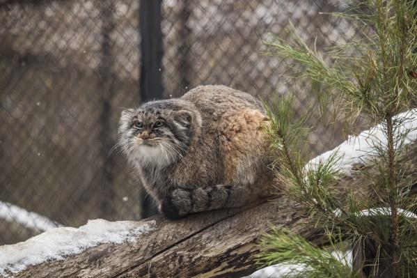 Массовая уборка начнётся в зоопарке 16 апреля