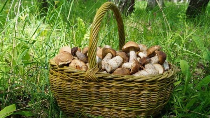 «В белых — ртуть, в груздях — медь»: рассказываем, как правильно собирать и готовить грибы
