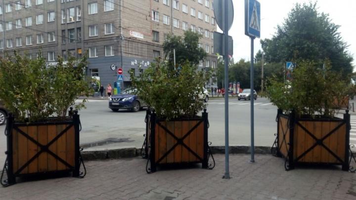 На улице Ленина для уюта расставили кадки с зеленью