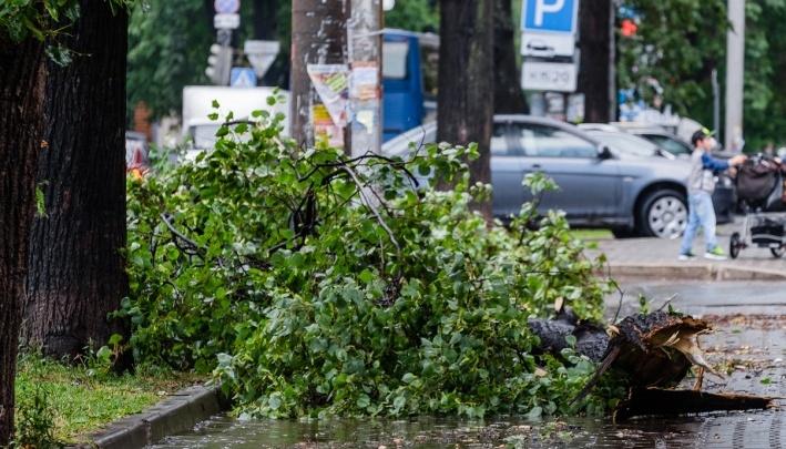 МЧС Прикамья предупреждает о штормовом ветре