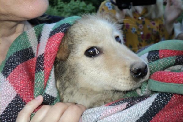 После спасения щенка передали волонтёрам