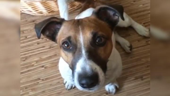 Гуляющий в огромном норильском сугробе пес Марвин набирает популярность на YouTube