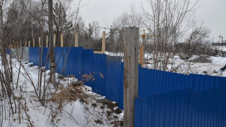 Отдают лес под вырубку: чиновников Красноярска обвинили в плохой охране деревьев
