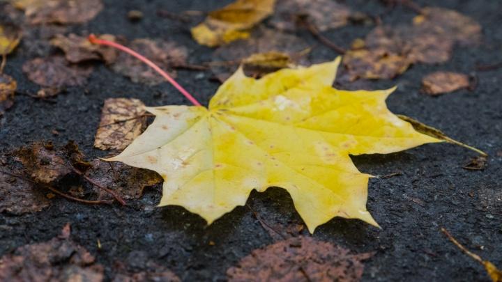 Дожди и ночные заморозки. Рассказываем о погоде в Прикамье на выходные