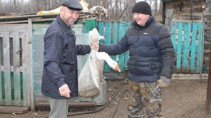 В Башкирии «чупакабру», сгубившую гусей, выпустили на свободу