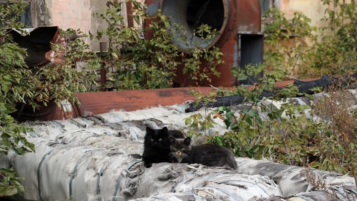 Неизвестный центр: заглядываем во дворы и переулки, которые прячутся за главными улицами Омска