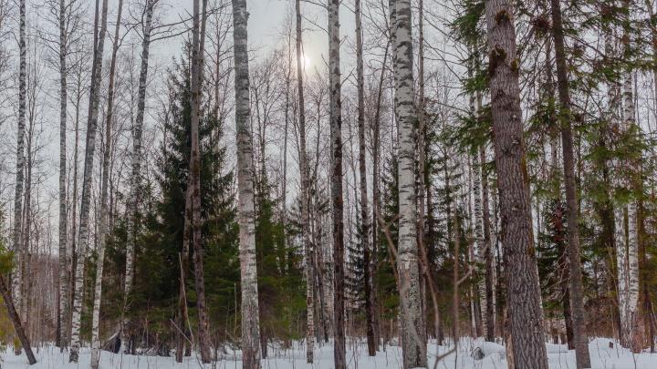 Пермь присоединится к акции «Сохраним лес»: карта мест, где будут принимать макулатуру