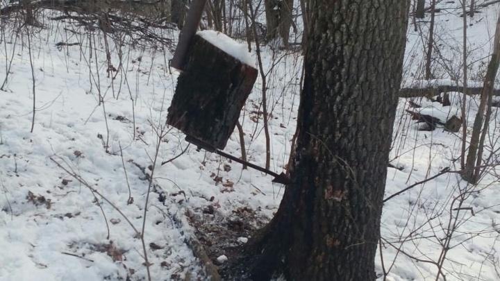 В лесу под Самарой охотники расставили опасные ловушки