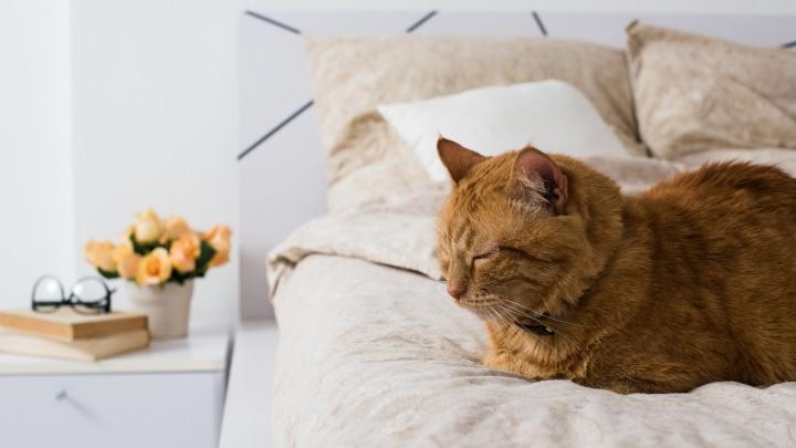 Сплошное ми-ми-ми: помоги рыжему коту Грине выбрать, какая квартира подходит его хозяевам