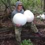 «Один гриб — и полная сковородка!»: житель Самары нашёл за Волгой огромные дождевики