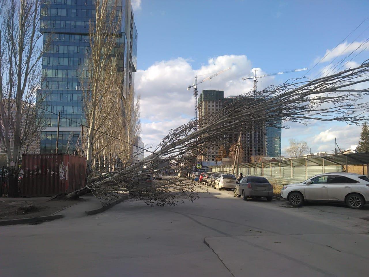 А на улице Московской ветер повалил тополь