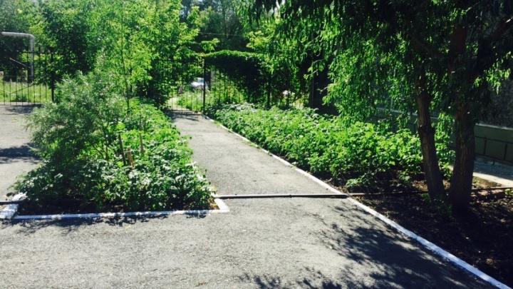 «Осталась тяга к посадкам»: челябинский пенсионер разбил сад с перцем и картошкой возле многоэтажки