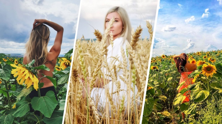 Красноярцы облюбовали подсолнуховые поля для фотосессий. Рассказываем, где их найти