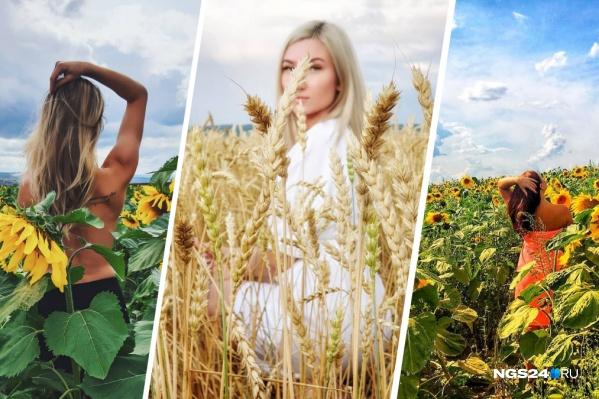 Профессиональные фотографы и обычные красноярцы устраивают фотосессии в полях