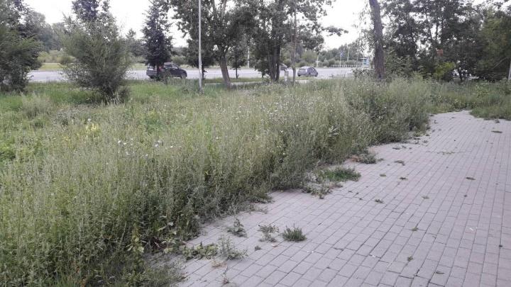 Покос на миллион: рассказываем, кому жаловаться на заросшие газоны в Челябинске
