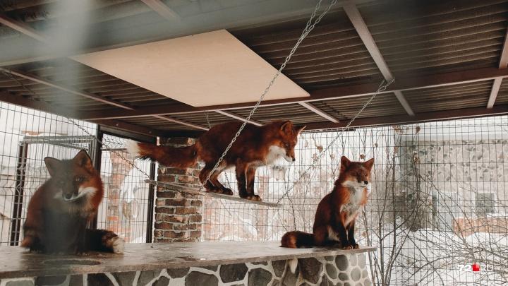 16 фото с зимовки тюменского зоопарка. Смотрим, как животные греются у батареи и жмутся друг к другу