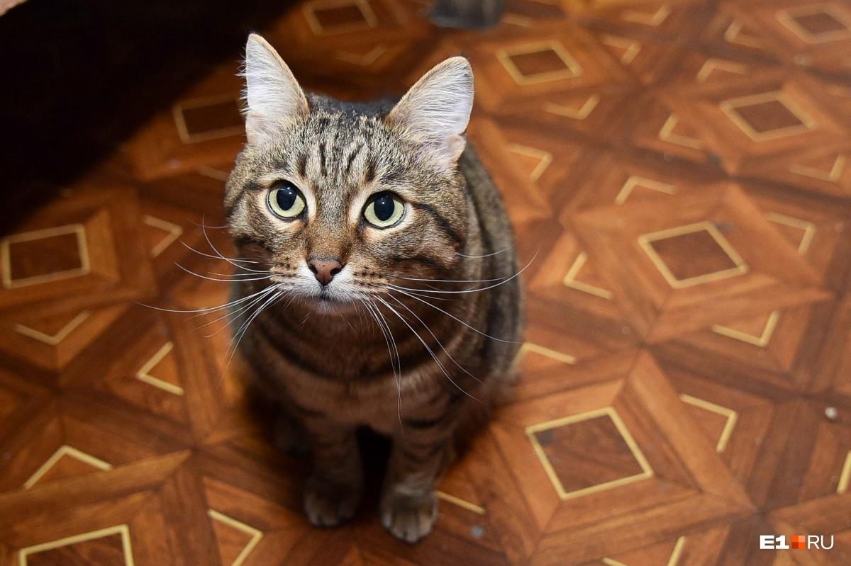 Котики — мастера манипуляции, не ведитесь! Давайте еды столько, сколько указано на упаковке корма (но, если кот начнет худеть или толстеть, поменяйте дозу)