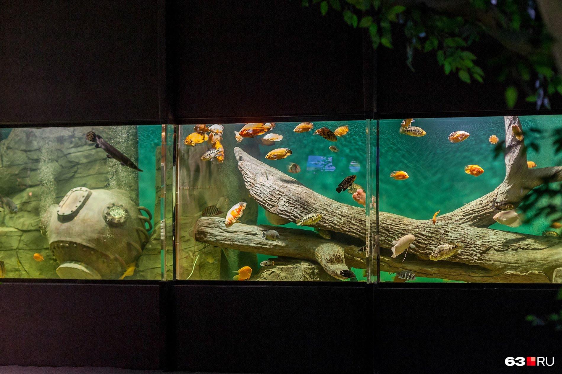 За тонкой перегородкой живут разные виды рыб