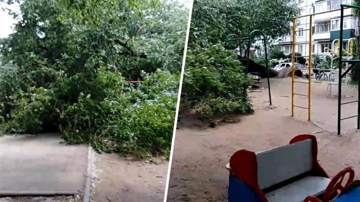 На Стара-Загоре огромное дерево упало на детскую площадку