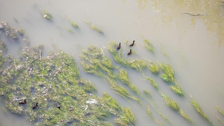 Ростовские ученые создали программу для оценки загрязнения воды
