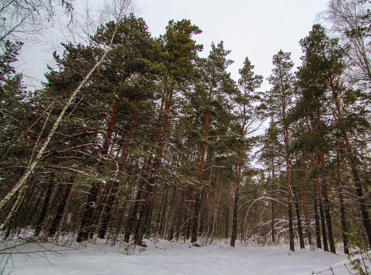 Лес, парк, дом — все в одном