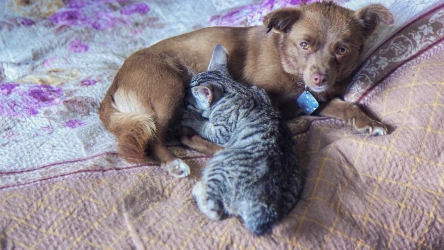 В приюте под Уфой собака стала мамой для котёнка