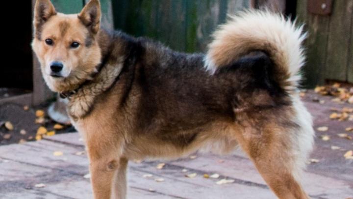 В Ярославской области будут судить мужчину, который расстрелял соседа из-за своей собаки