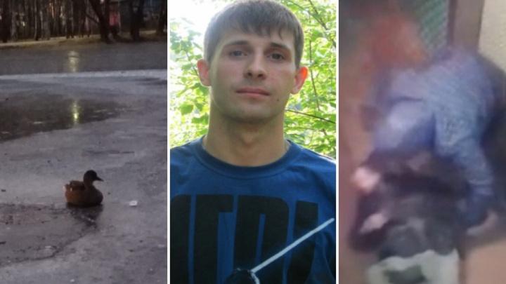 Уточка вмёрзла в лед, пропал многодетный отец, жестокое избиение: новости Ярославля за выходные