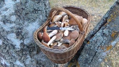 25 секретных точек: составили интерактивную карту грибных мест