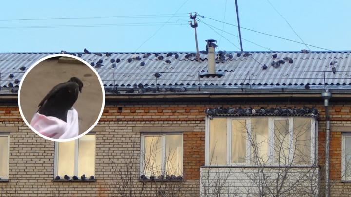 Жители многоэтажки развернули спасательную операцию, чтобы вытащить застрявшего в вентиляции голубя