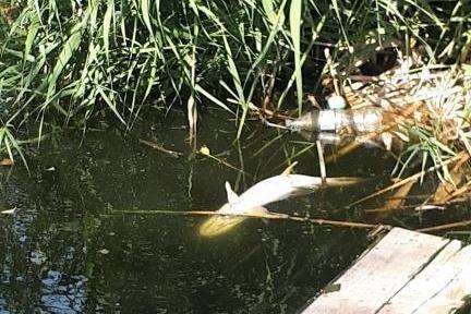 Массовый замор рыбы произошел в начале осени