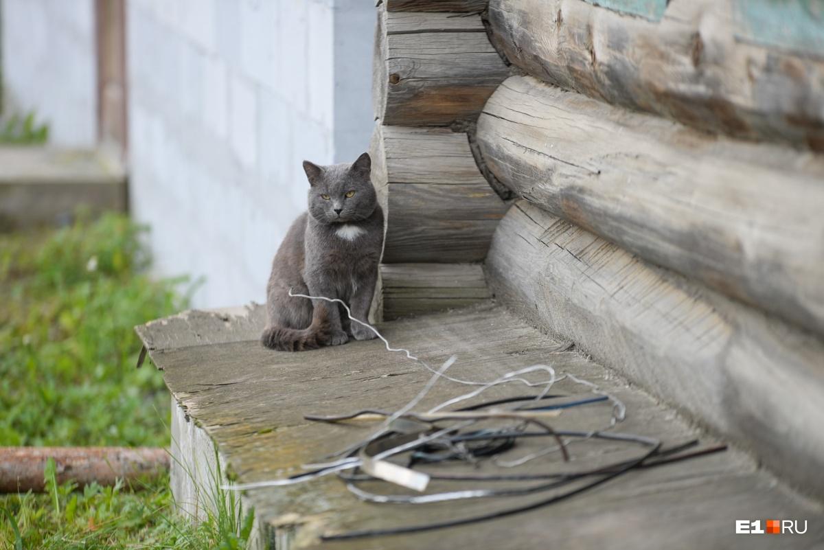 То тут, то там навстречу выходят кошки, которые не боятся ни машин, ни людей, ни собак